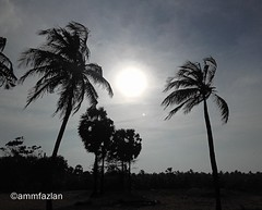 Palm Trees and The Sun (ammfazlan) Tags: travel trees sunset two sky sun sunlight white plant black tree travelling up silhouette clouds rural dark island photography blackwhite seaside high amazing focus asia day afternoon angle outdoor samsung windy roadtrip sl sri lanka palmtrees daytime srilanka far palmyra pleasant clearsky thesun coconuttrees southasia dayshot fazlan palmyratrees clearclouds ammfazlan fazlaan