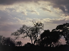 Vultures in the sky (chillbay) Tags: africa camp southafrica safari krugernationalpark kruger tandatula krugerafrica