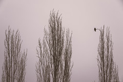extravagance (alicebutenko) Tags: trees winter sky bw bird moments mood branch graphic feel free atmosphere lonely melancholy timeless meditative extravagance
