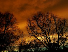 Storm is coming up (BrigitteE1) Tags: street city blue winter light sunset red sky orange sun tree yellow clouds germany de outside photography photo europe bremen stormiscomingup