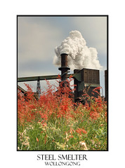 Steel Mill Smelter emitting toxic fumes from chimney (sugarbellaleah) Tags: flowers chimney mill industry nature toxic metal industrial factory smoke steam pollution environment emissions offensive sulfurdioxide odour smelter fumes billowing gases steelmill toxins heavymetals hydrogenfluride