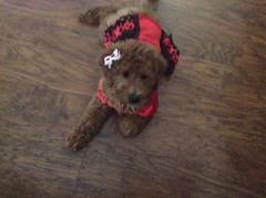 Ruby's Sadie is looking beautiful in her outfit!!