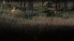 Titania on the Pegola (InByTheEye) Tags: park winter brown film gold purple grasses titania pergola magicrealism