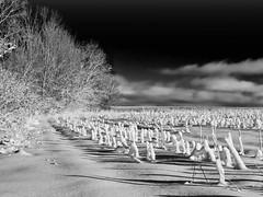 The Ridge (Mulewings~) Tags: winter sky blackandwhite bw snow fields backroads farmfield ontheridge vernoncounty