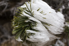 _MG_0998 (schamrock77) Tags: winter italy mountain ice freezing natura inverno montagna friuli ghiaccio galaverna canon6d 35f2is