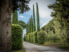 Larissa Photography (1 von 1)-9 (lari-la) Tags: toscana zypressen