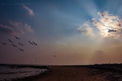 Rishikonda Beach (tanmaybastia) Tags: beach vizag andhrapradesh visakhapatnam rishikondabeach