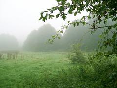 Fog at Crabtree Plantation (Beardy Vulcan) Tags: autumn england fall field weather fog hampshire september hedge plantation 2008 basingstoke crabtree oldbasing crabtreeplantation fogincrabtreeplantation