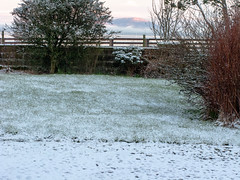 snow_in_our_garden_7878-1 (allybeag) Tags: trees winter snow weather sunrise garden veg cobbles bushes criffel slouds