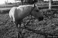DSC_0046 (Promao80) Tags: lago tramonto cuba moron cavallo viaggio vacanza calesse