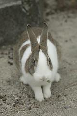 rabbit #5 (Y.Hassy) Tags: rabbit animal