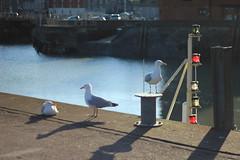 The stages of Evolution (My_adventure) Tags: uk england sunlight seagulls west beach water sunshine birds yard marina docks coast boat seaside yacht south sunny adventure daytime