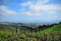 Artimino Landscape 2