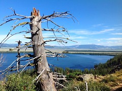 Grand Teton (alisapeng) Tags: tree america wyoming grandteton lanscape jacksonlake