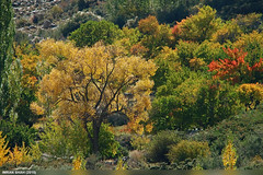 Autumn Colors (gilgit2) Tags: trees pakistan mountains canon landscape geotagged rocks sigma tags location elements vegetation greenery borit gojal gilgitbaltistan sigma150500mmf563apodgoshsm imranshah canoneos70d gilgit2