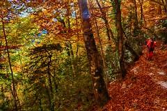 gr15 (Carlos M. M.) Tags: huesca hiking bosque hdr pirineos excursin aragn peaguara canon100d