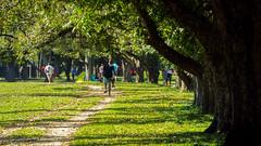 Pedalando (evandromon) Tags: park parque sun man tree nature sunshine bike freedom daylight natureza bicicleta jardim arvore bycicle