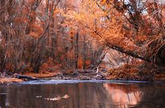 El Ro de Alice (mls2012) Tags: autumn red water rio canon river long otoo mls fotografa buclico expossure canonphotography 60d