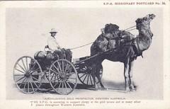 A Coolgardie Gold Prosperctor, Western Australia - very early 1900s (Aussie~mobs) Tags: vintage postcard missionary westernaustralia spg coolgardie goldprospector
