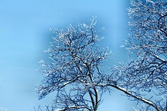 It's all about blue (CCphotoworks) Tags: blue trees nature outdoors drama colorblue baretrees barebranches