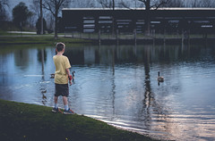 Reflection (pooshda) Tags: boy lake holland color reflection nature water mi zeiss geese kid pond child michigan sony goose 55mm graded alpha timbertown a7rii