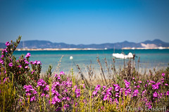 2016-04-09_IMG_3596 (talentfrei79) Tags: espaa primavera canon mar spain mediterraneo abril espana april formentera islas spanien mediterrneo baleares frhling balearen balears 2016 mittelmeer illes 50d pityusen