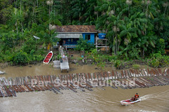 Canal de Breves (guiraud_serge) Tags: brazil brasil brésil amazonie amazone déforestation sergeguiraud jabiruprod