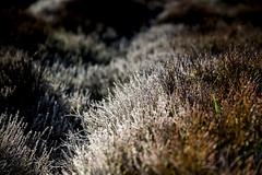 Frost in late April (jackharrybill) Tags: frost frosty haworth