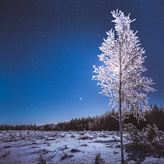 Moonlight (unijaz) Tags: trees winter light moon cold night suomi finland dark stars landscape shadows moonlight winterscape kainuu puolanka