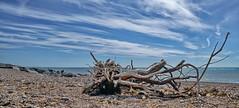 Lancing Beach...... (Gary-West Sussex) Tags: sky cloud beach driftwood lancing