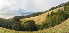 Coastal (zh3nya) Tags: california trees panorama green grass pine coast mt pacific cloudy hiking pano marin bolinas hills trail shore bayarea d750 stinsonbeach tam rolling stinson northbay sigma35mmf14