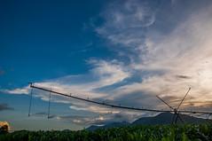 (evaldoheber) Tags: sunset sky clouds corn cu crop nuvens pivo zeamays milho plantio caucaia ehsn evaldonascimento evaldoheber evaldohsnascimento milaral