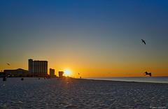 Morning Sunrise Pensacola Beach (Stuart Schaefer Photography) Tags: morning travel sea sky seascape beach gulfofmexico birds skyline sunrise landscape outdoors coast florida outdoor shoreline bluesky shore sunburst condos pensacolabeach seasode