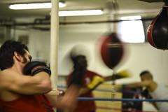 Noble Art (102 RENATO) Tags: palestra boxe boxeur allenamento pugili pinan renatopizzutti