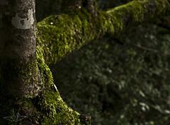 Tree (J-espinoza) Tags: naturaleza tree musgo nature arbol moss nikon aire libre