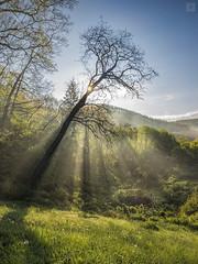 Holy Hole to Hell (<-Y->) Tags: morning sun fog forest nap dam reservoir holy sunbeams foggymorning kd pra 1116 reggel 650d salgtarjn ellenfny tlfoly tokina116 tokina1116 giccspard kdsreggel relieftube fnypszma
