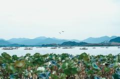 DSC_0007-1 (BenjaminXu) Tags: beautiful view hangzhou 旅行 杭州