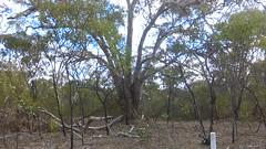 Para Wirra 21 (WEA Ramblers) Tags: hiking australia bushwalking southaustralia parawirra yattalunga fayharding