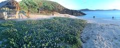 IMG_3503 (elleica) Tags: summer vacation beach islands whitebeach daet camarinesnorte calaguasislands