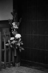 New Year's Pine Decoration & Chrysanthemum (Purple Field) Tags: street new leica bw film monochrome japan analog 35mm walking 50mm alley kyoto fuji iso400 year decoration rangefinder summicron   neopan m3   presto  f20           stphotographia