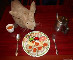Dr. Takeshi Yamada and Seara (Coney Island sea rabbit) at the East Ocean Chinese Buffet in Brooklyn, NY on December 18, 2015. This is his favorite Chinese restaurant in NY. sushi. raw oysters. 20151218Fri DSCN2557=C (searabbits23) Tags: winter ny newyork sexy celebrity art beach hat fashion animal brooklyn asian coneyisland japanese star costume tv google king artist dragon god cosplay manhattan wildlife famous gothic goth performance pop taxidermy cnn tuxedo bikini tophat unitednations playboy entertainer samurai genius donaldtrump mermaid amc mardigras salvadordali billclinton billgates aol vangogh curiosities sideshow jeffkoons globalwarming takashimurakami pablopicasso steampunk damienhirst cryptozoology freakshow barackobama polarbearclub newyearday seara immortalized takeshiyamada museumofworldwonders roguetaxidermy searabbit ladygaga climategate minnesotaassociationofroguetaxidermists