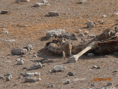 Africa 2015 613 (Absolute Africa 17/09/2015 Overlanding Tour) Tags: africa2015