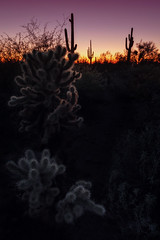 Desert After Dark (Brian Truono Photography) Tags: statepark sunset arizona cactus sky nature phoenix landscape us glow unitedstates desert dusk dry sharp sillouette saguaro prickly spikes hdr highdynamicrange cholla lostdutchman superstitionmountains apachejunction exposureblending