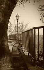 I_sostegni_del_lungo_cammino (Danilo Mazzanti) Tags: photography foto photos belvedere fotografia albero lampione fotografo danilo seppia mazzanti ringhiera corrimano roccagrimalda danilomazzanti wwwdanilomazzantiit
