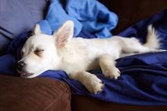 Shelly (Natalia Subbotina) Tags: summer inspiration dogs beautiful puppy photo view wildlife sydney australia nofilter photooftheday wildlifephotography bestoftheday