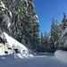 Parque Nacional Monte Rainier