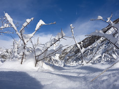 Snowy landscape (Tonio06fr) Tags: wood blue winter sky white mountain snow tree forest landscape leaf snowy orchard