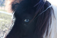 Day44 (rendezvousnu) Tags: horses horse animals southcarolina charleston equestrian eulalie magnoliaplantation animalphotography project365 equin projecteulalie