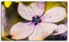 Extreme close-up of a beautiful Hydrangea Macrophylla flower (KS Photography!) Tags: pink blue summer sunlight india white plant flower color macro floral beautiful beauty sunshine closeup garden outdoors leaf flora colorful close purple blossom gardening vibrant background decoration violet fresh petal frame bloom romantic environment shrub deciduous kodaikanal endless blooming hortensia hydrangeamacrophylla macrophylla hydrangeaceae bigleafhydrangea lacecaphydrangea beautyinnature mopheadhydrangea frenchhydrangea pennymac