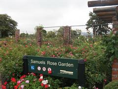 Samuels Rose Garden